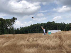 Man flying drone in field